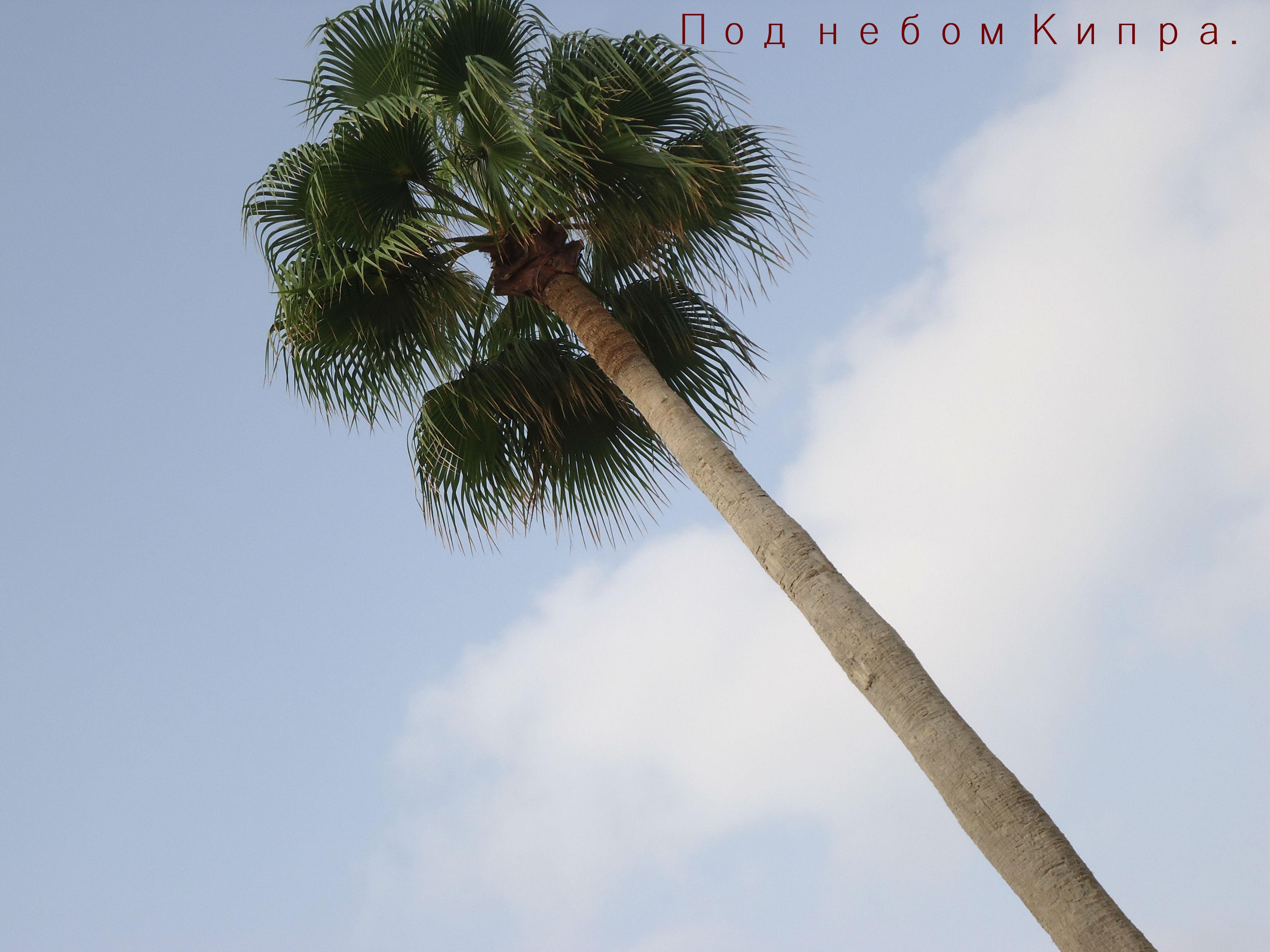 Кипр в блог
