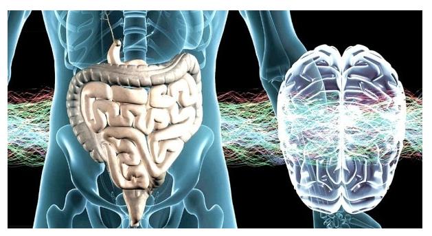 Наша радость в здоровом кишечнике- по мотивам одной статьи.