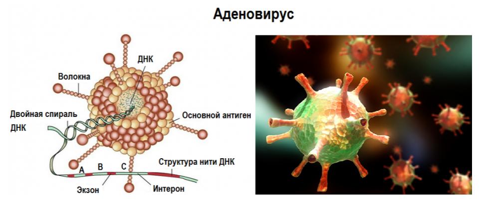 Кто бы сомневался, что передача  вирусов ОРВИ через нос бывает.