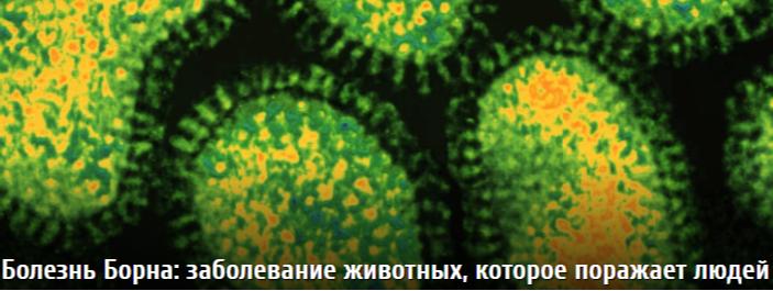 """Вот и еще один """" странный"""" вирус, случайно обнаруженный  на моем  РОФЭС в Сибири (Омск)."""